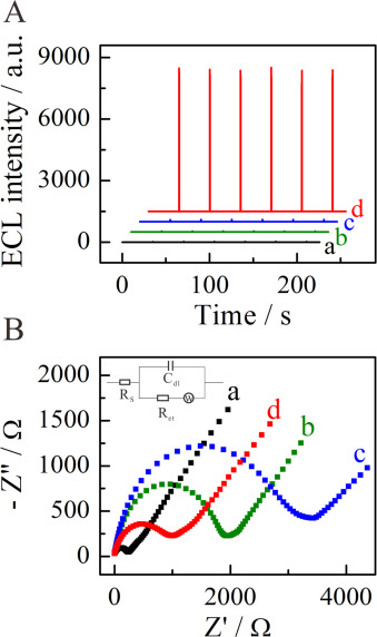 Ultrasensitive Faraday cage-type electrochemiluminescence assay for