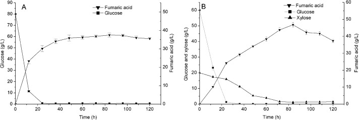 Co-fermentation of a mixture of glucose and xylose to fumaric acid