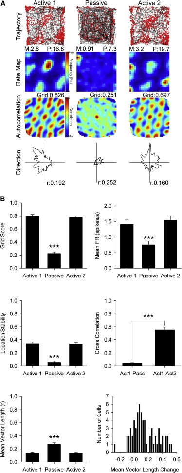 Passive Transport Disrupts Grid Signals in the Parahippocampal