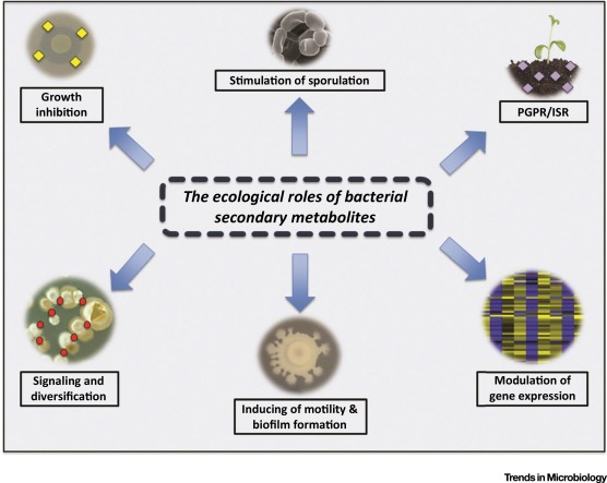The Ecological Role of Volatile and Soluble Secondary Metabolites