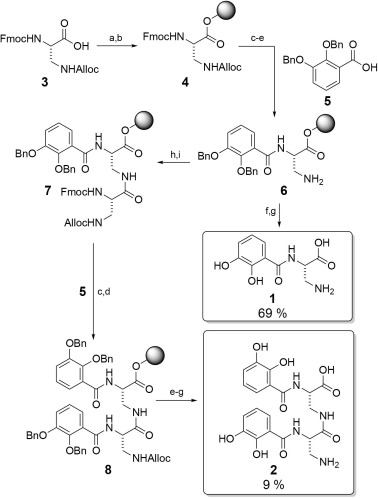 Design, solid-phase synthesis and evaluation of enterobactin analogs