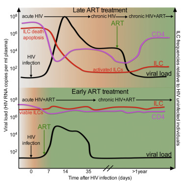 Innate Lymphoid Cells Are Depleted Irreversibly during Acute HIV-1