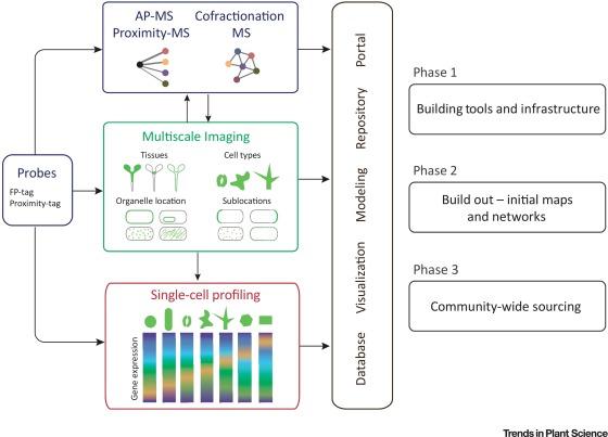 Towards Building a Plant Cell Atlas - ScienceDirect