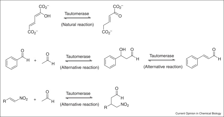 Recent developments in enzyme promiscuity for carbon\u2013carbon bond