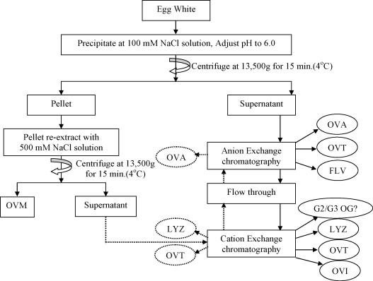 Co-extraction of egg white proteins using ion-exchange - cation exchange chromatography