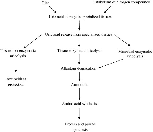 Uric acid in plants and microorganisms Biological applications and