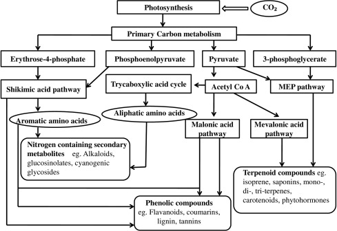 Impact of various factors responsible for fluctuation in plant