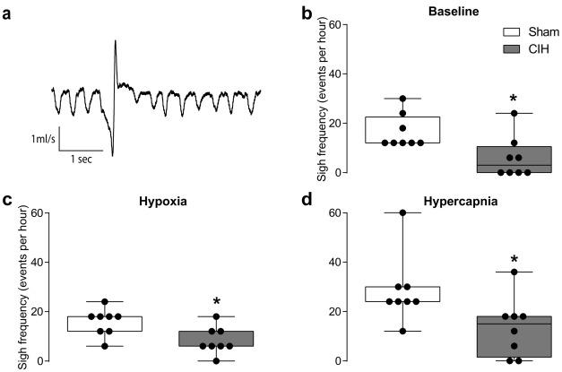 Chronic intermittent hypoxia disrupts cardiorespiratory homeostasis