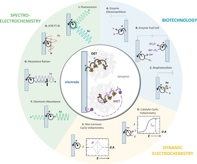 Electrochemistry of surface-confined enzymes Inspiration, insight