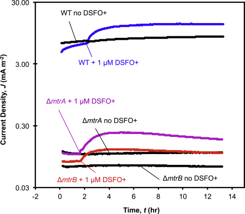A Ferrocene-Based Conjugated Oligoelectrolyte Catalyzes Bacterial