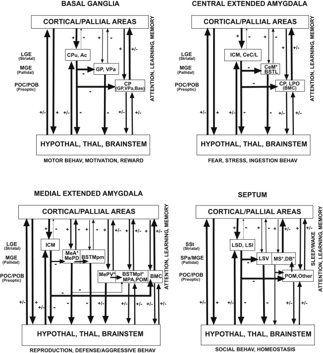 Subpallial Structures - ScienceDirect