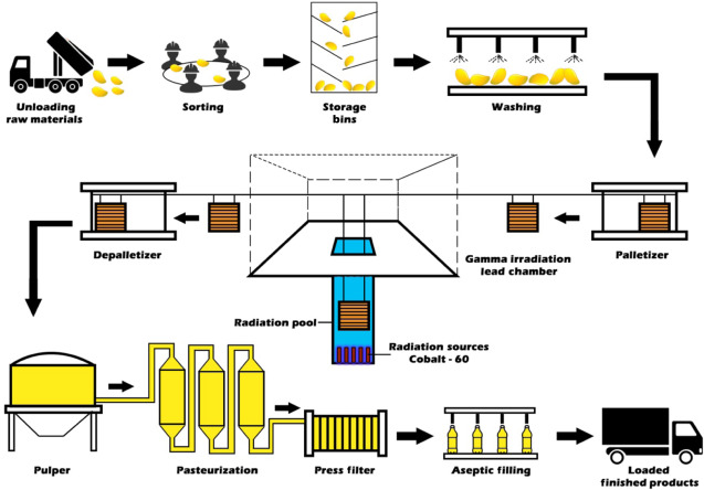 Gamma Irradiation Usage in Fruit Juice Extraction - ScienceDirect