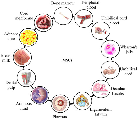 Medical Biotechnology Techniques and Applications - ScienceDirect