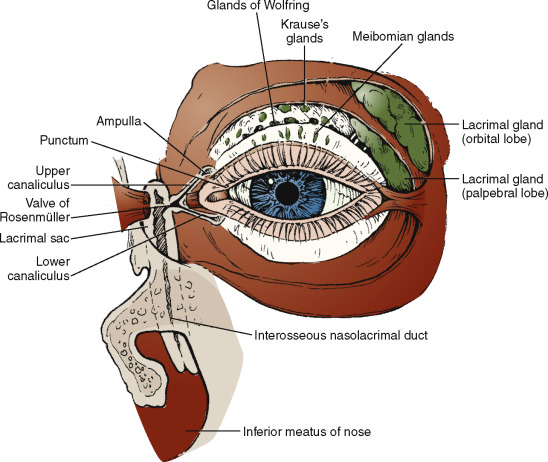Nasolacrimal Duct Obstruction - an overview ScienceDirect Topics