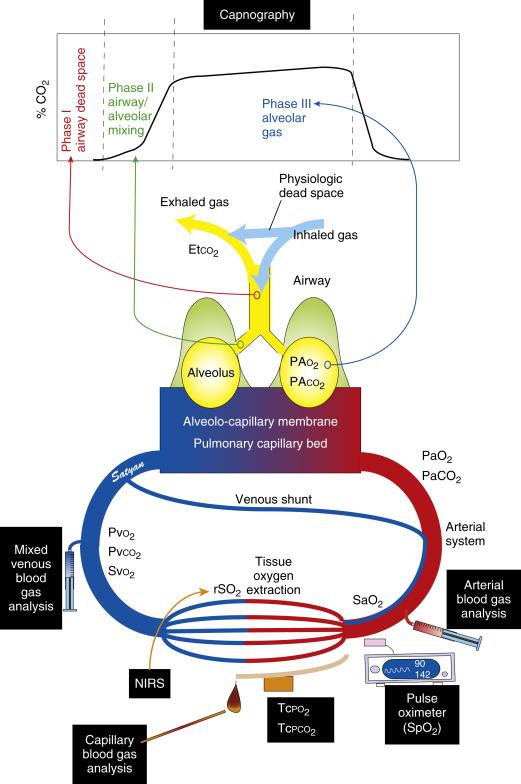 Gas Exchange - an overview ScienceDirect Topics