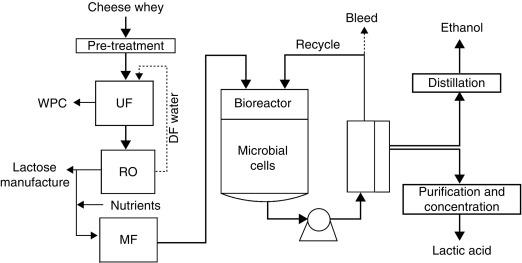 Lactic Acid - an overview ScienceDirect Topics