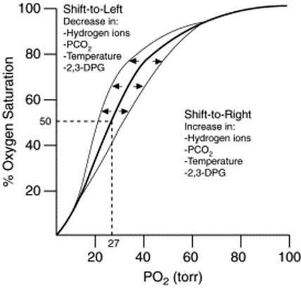 Oxyhemoglobin - an overview ScienceDirect Topics