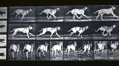 Corsa del cane