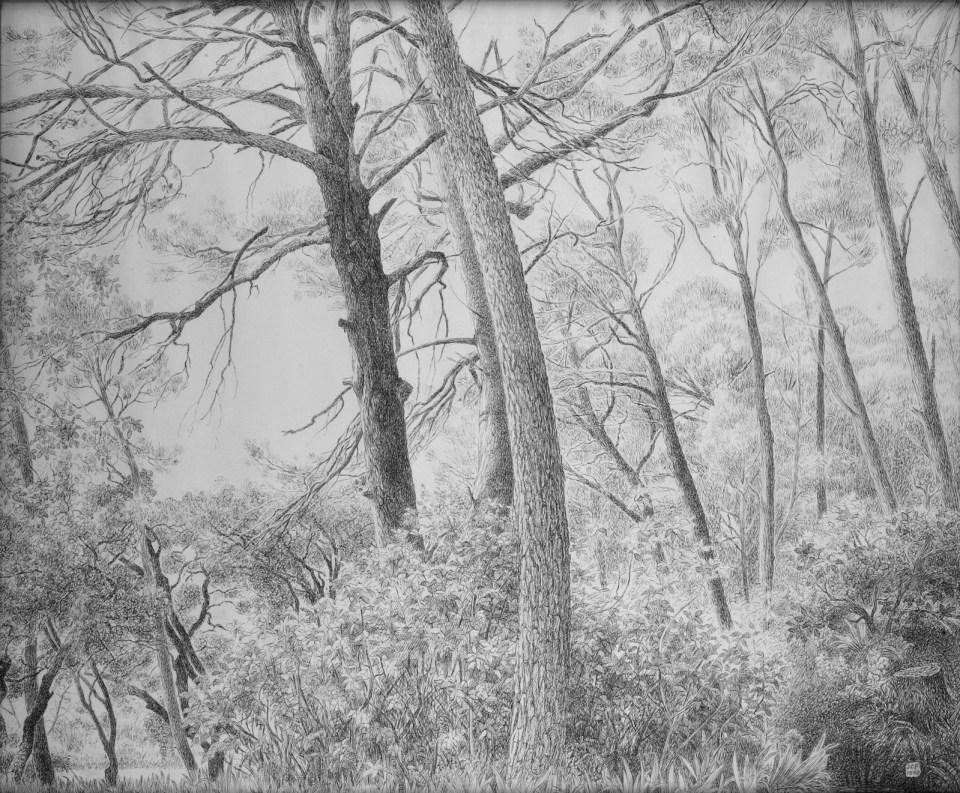 Jean-Claude Fourneau dessin forêt