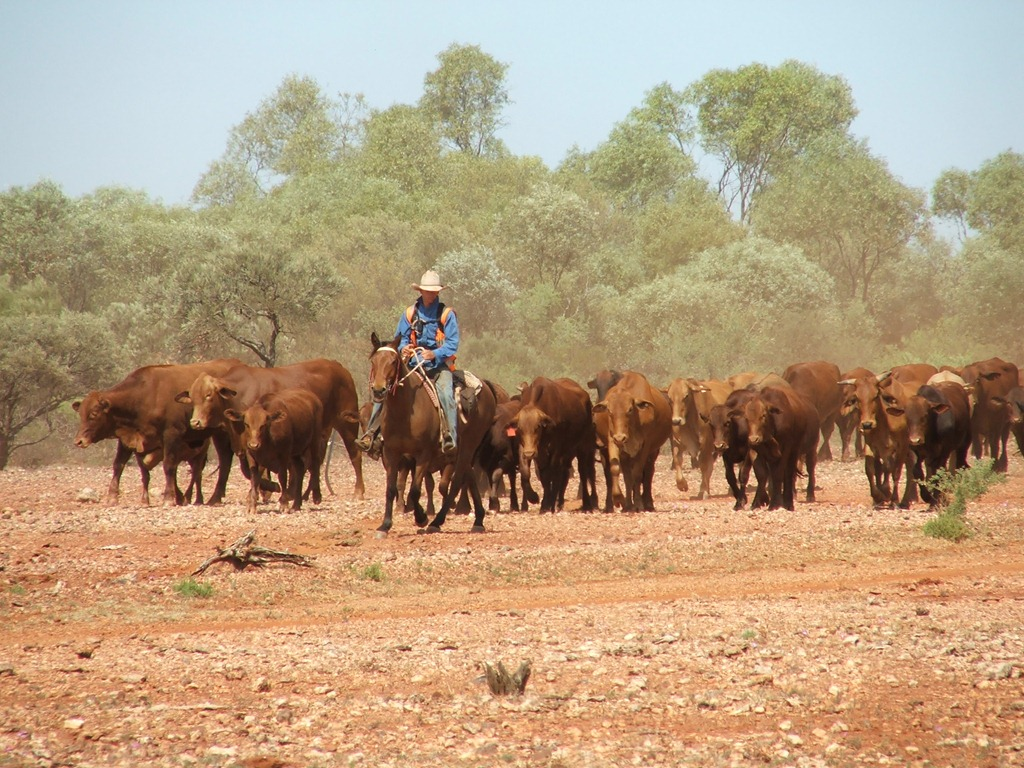 Mustering Jobs Australia Kristie De Pledge Shares Her Story Of Life On A Cattle