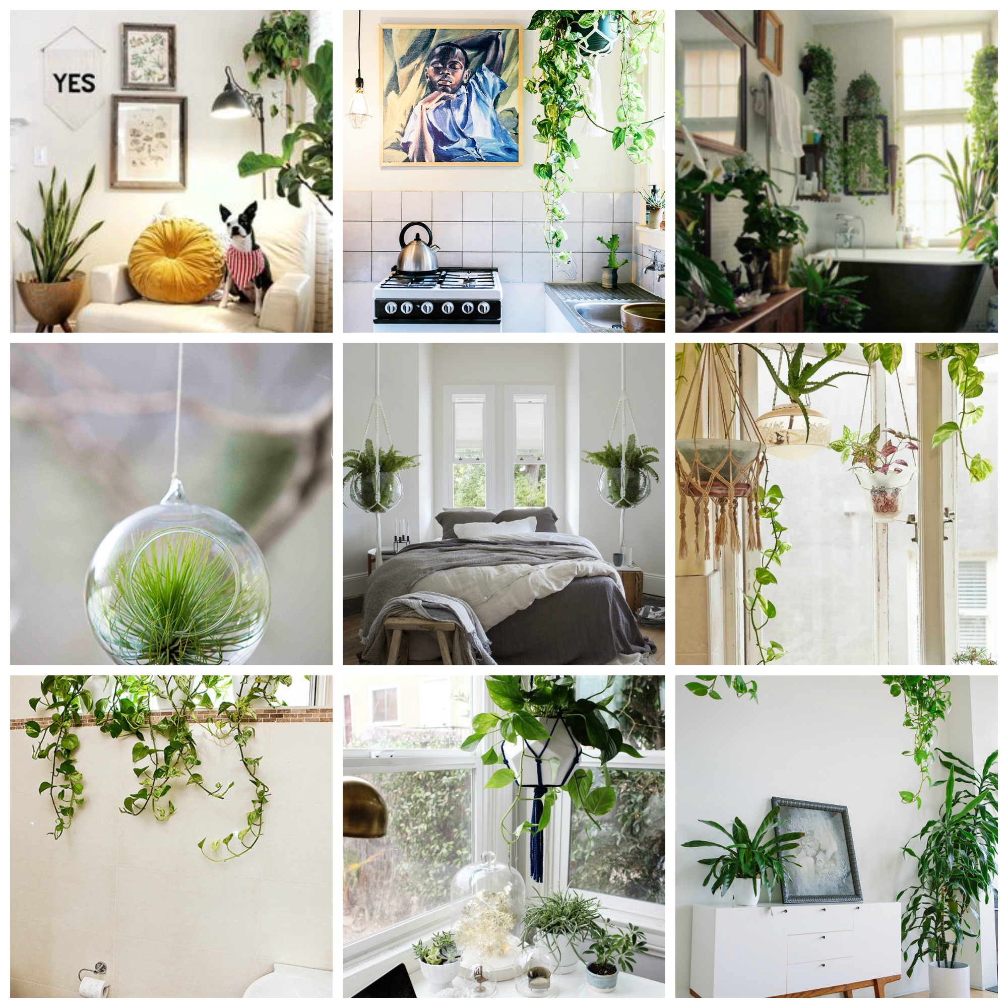 Plants Home Decor The Perfect Way To Hang Indoor Plants