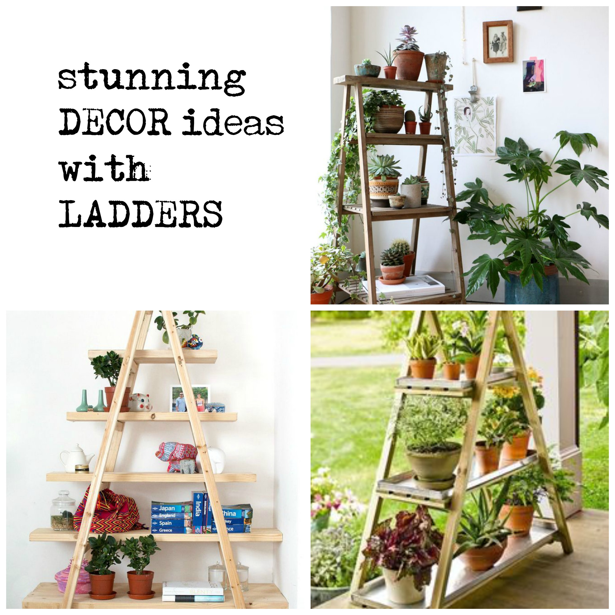 Home Decor Plants Gorgeous Ways To Decorate Your Home With Plants