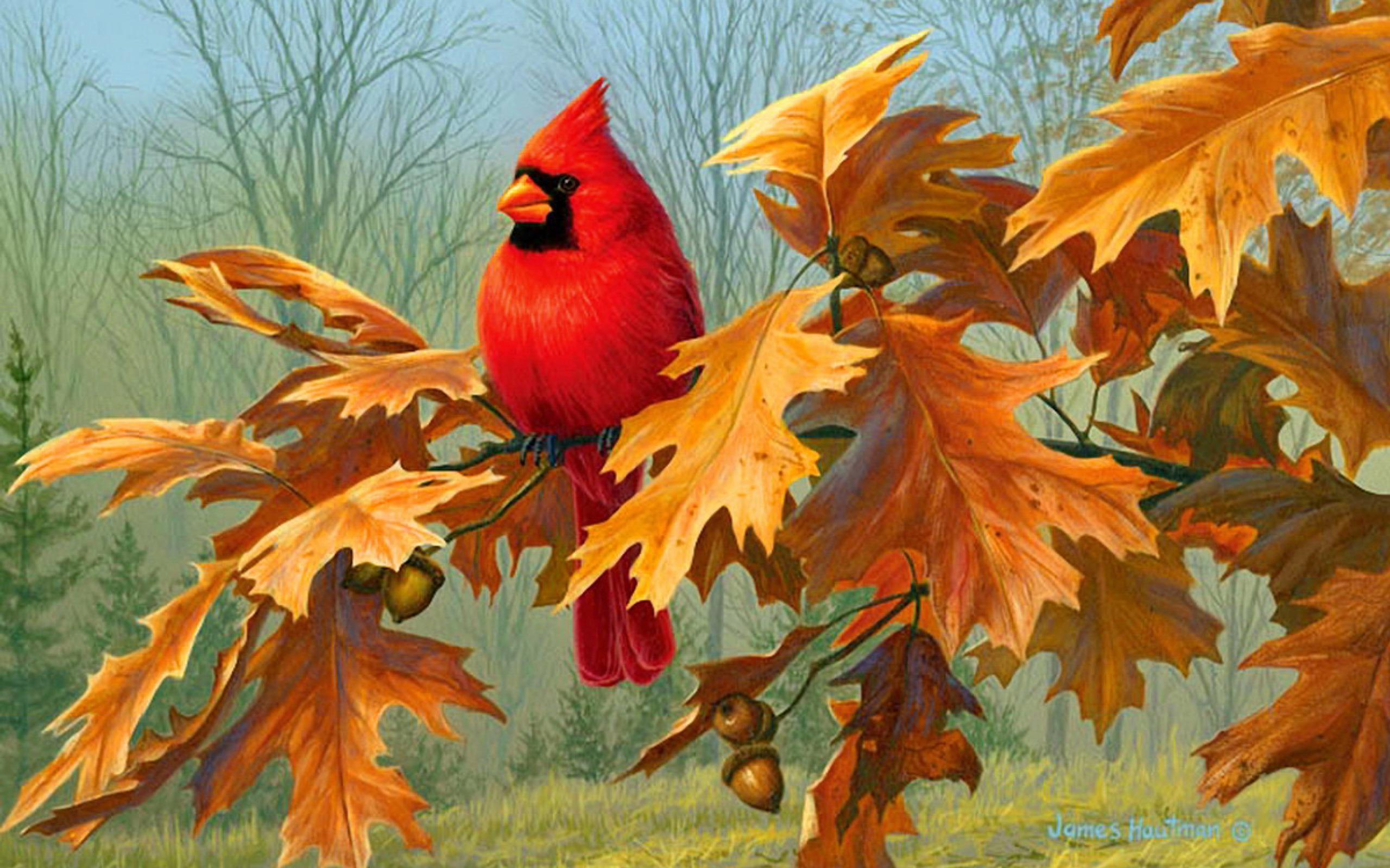 Hd Wallpaper Fall Leaf Change Cardinal Art Id 87634 Art Abyss