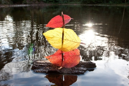 FloatingLeafBoat