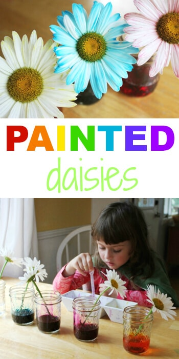 Painted Daisies Science Experiment for Kids