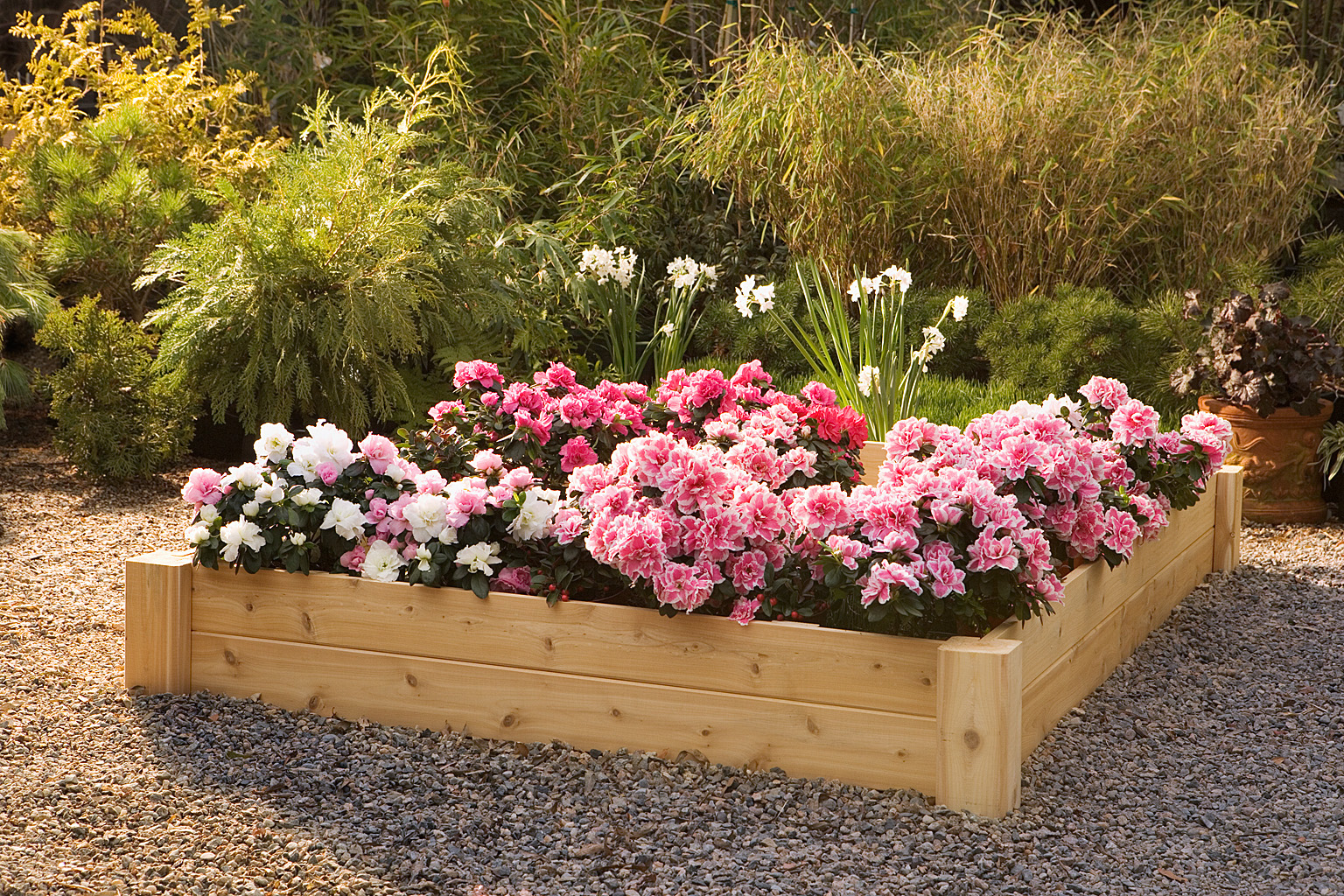 Professional Guide To Building Raised Garden Beds Articlecube