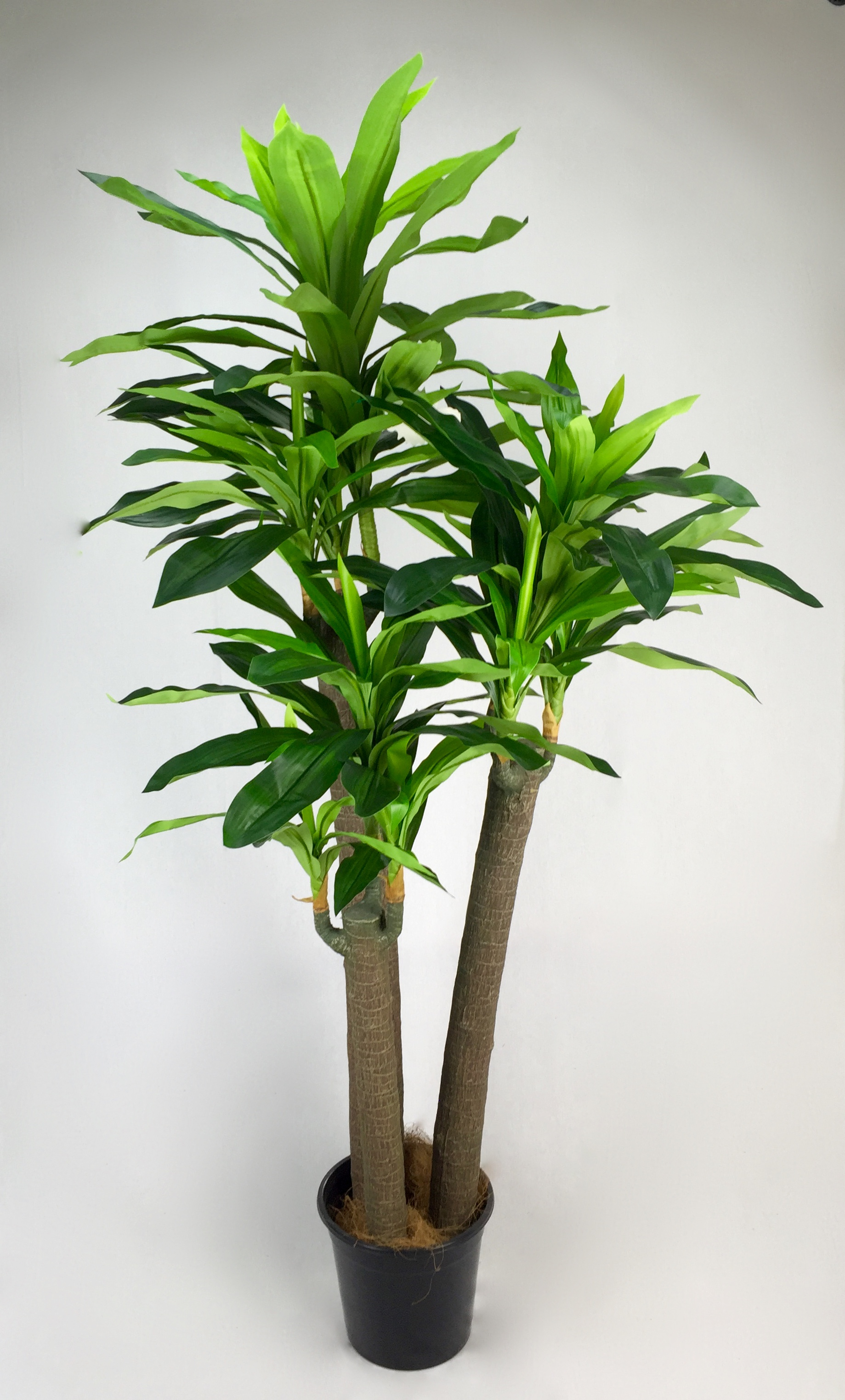 Artificial Plants Hire Artificial Plant Importers Australia Trees Flowers