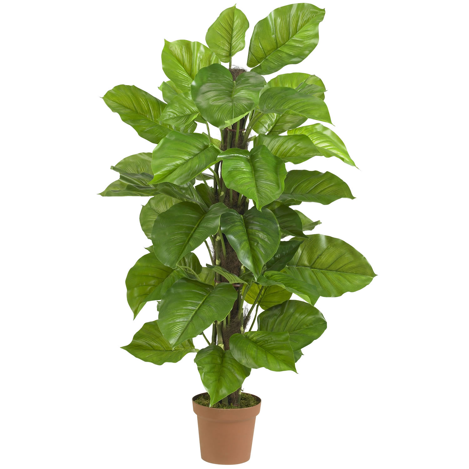 Big Pot Plants 52 Inch Large Leaf Philodendron Potted 6583