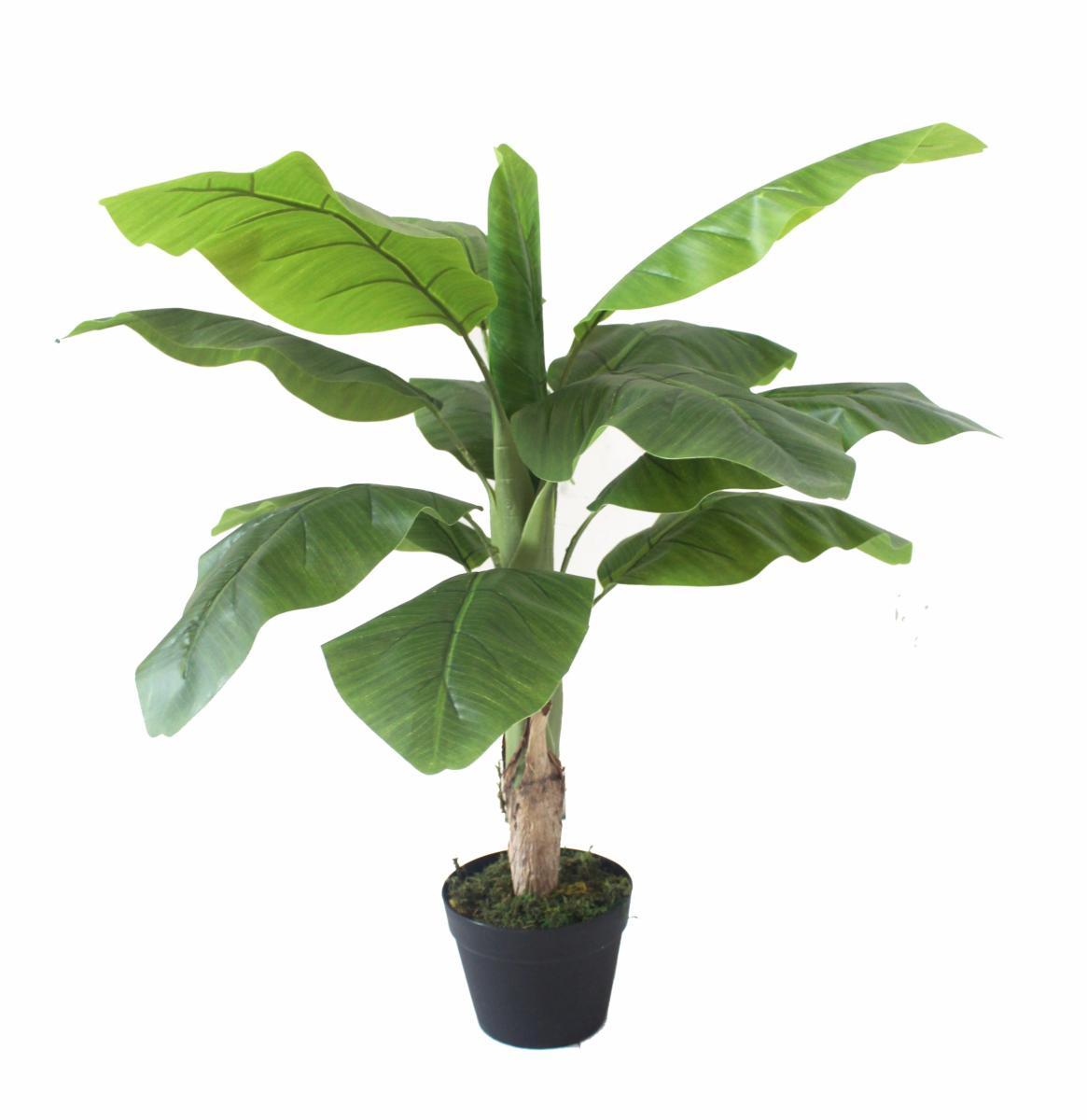 bananier d'intérieur jardiland | plantes vertes page 43 loisirs