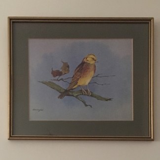 Yellowhammer by Gordon Beningfield