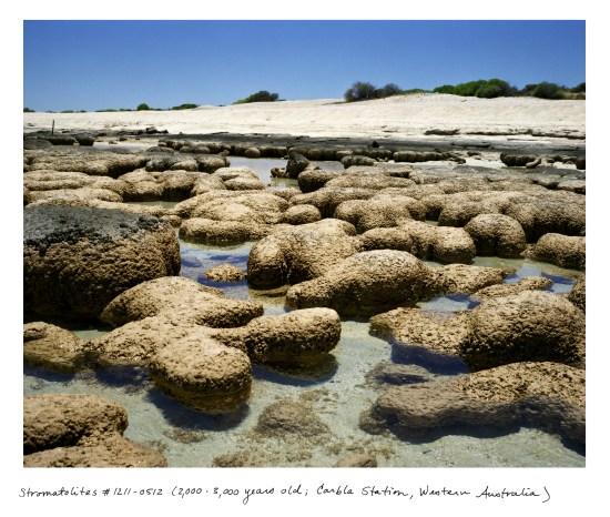 03_Sussman_WA_Stromatolites_1211_0512 copy