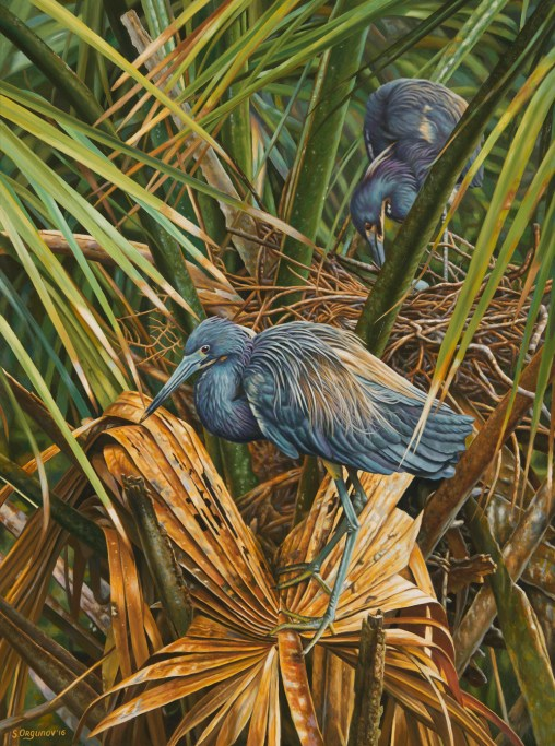 ,,Serenity,,_-Oil-on-linen,-40_x30_(Tricolord-Heron)-jpg