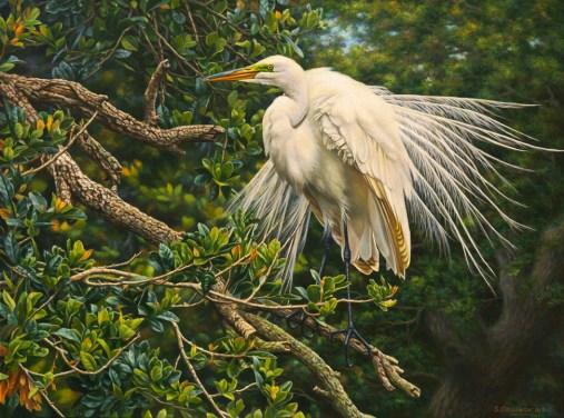 white-egret-2
