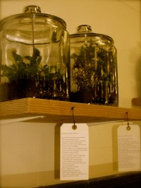 Medicine Cabinet Exhibition Pictures