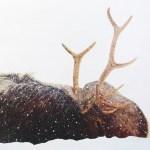 Elk in a snowstorm