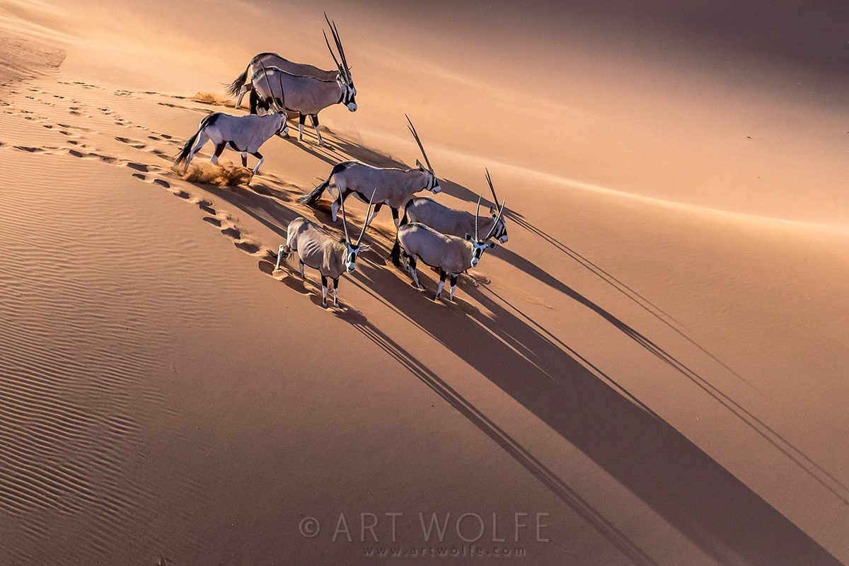 Art Wolfe Namibia New Photos From Namibia Art Wolfe