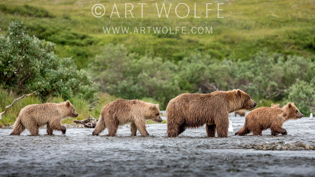 Art Wolfe Photo Tours Workshops Archives Art Wolfe