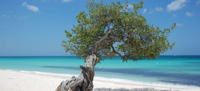 Free Hd Live Wallpapers For Pc Free Aruba Wallpapers For Pc Mac Iphone Ipad Smartphones