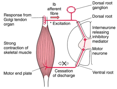 THE PHYSIOLOGY AND APPLICATION OF MUSCLE ENERGY TECHNIQUES Arun Pathak