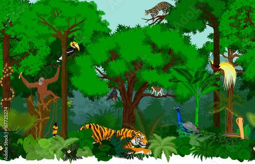 Vector asian seamless tropical rainforest Jungle background pattern