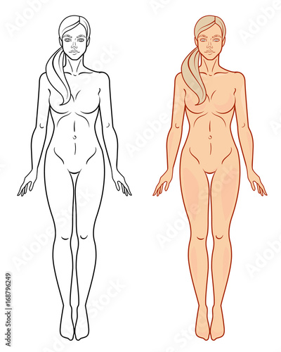 Female body template Isolated vector image - Buy this stock vector