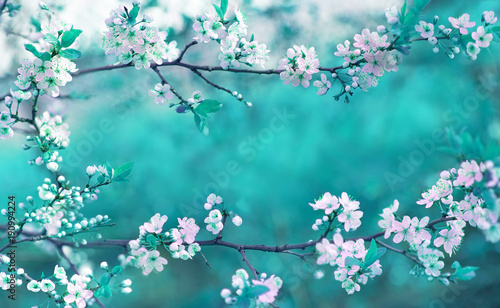 Beautiful spring floral background with branches of blossoming