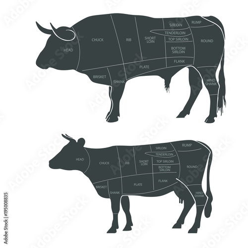 The beef cuts The scheme for cutting meat Butcher diagram Vector