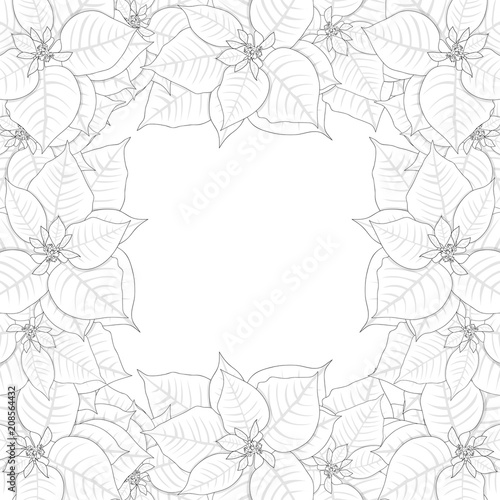 Poinsettia Outline Border isolated on White Background Vector