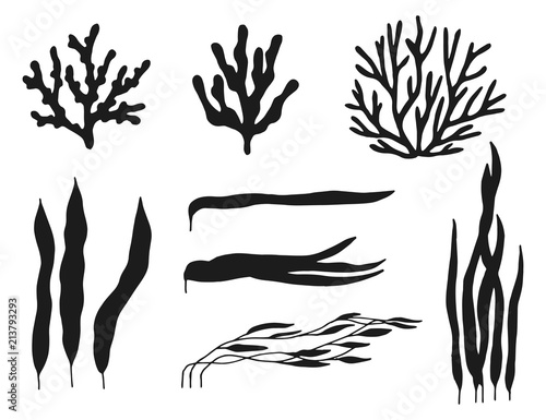 Algae Silhouette On White Background Leaves And Twigs Sea
