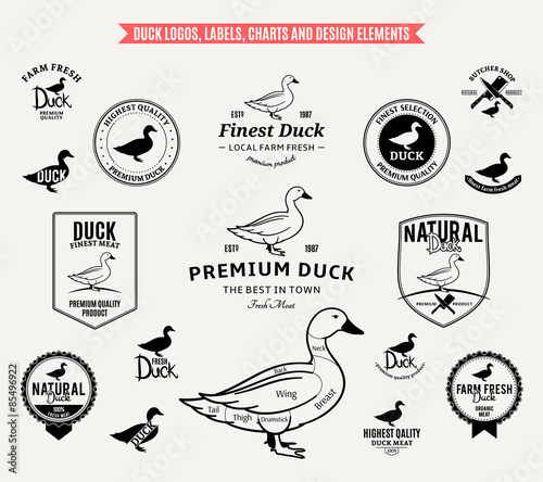 Duck Logos, Labels, Charts and Design Elements - Buy this stock
